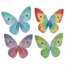 Oplátkový motýľ  3 - 6 cm